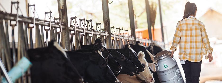Vacas_lecheras